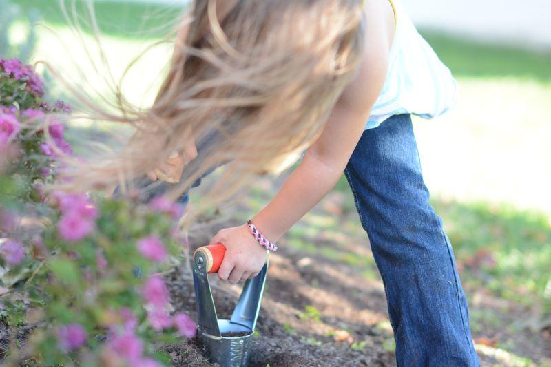 Tulip planting1