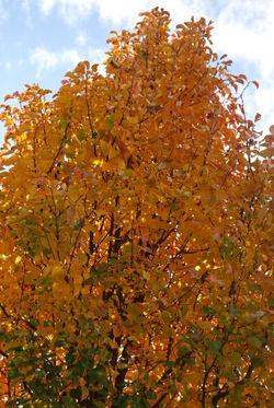 November_2007_030