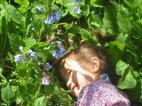 Bluebells_2006_009