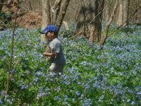 Bluebells_2006_035