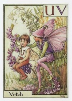 The_vetch_fairy